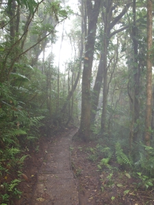 Trail in the Santa Elena Cloud Forest Reserve